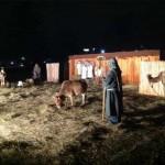 Nativity Animal Rental in Ohio