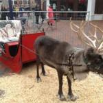 Reindeer Rental in Ohio