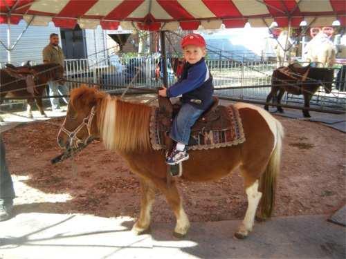 pony ride rentals for birthday parties in delphos ohio jungle