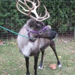 Reindeer & Exotic Animals for Sale in Ohio