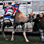 Camel Rides For Events in Ohio