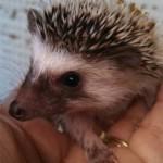 Exotic Animal Breeding in Ohio